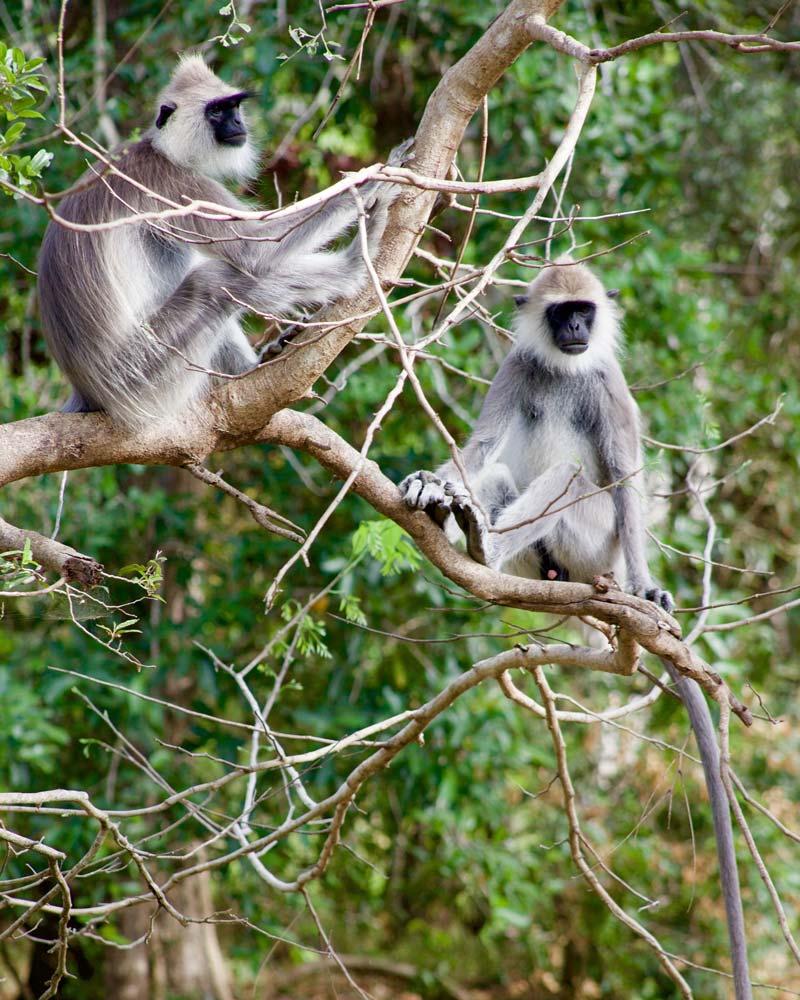 animal safari in sri lanka
