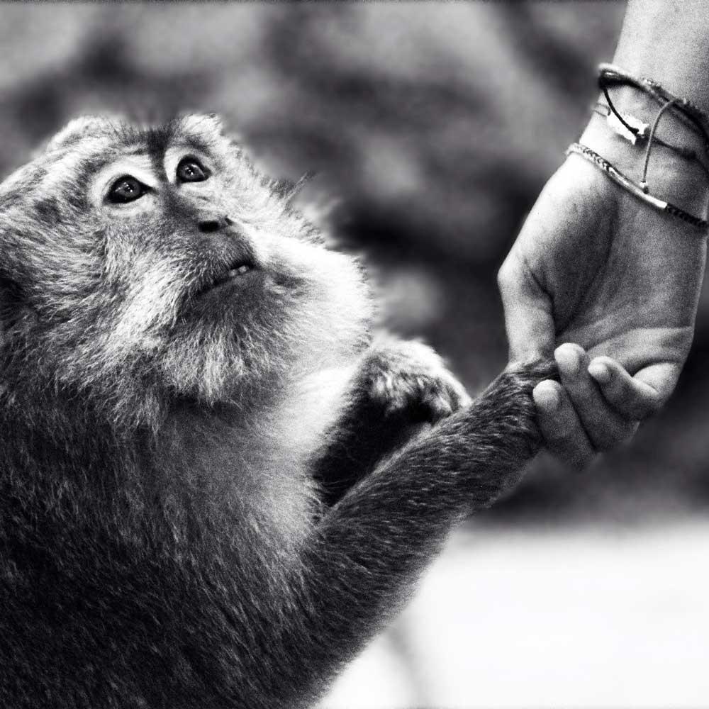 Monkey Tourism