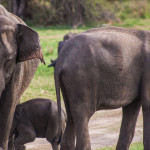 Safari in Sri Lanka