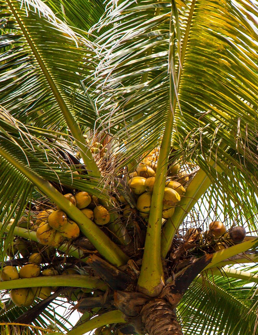 Agona Beach Goa