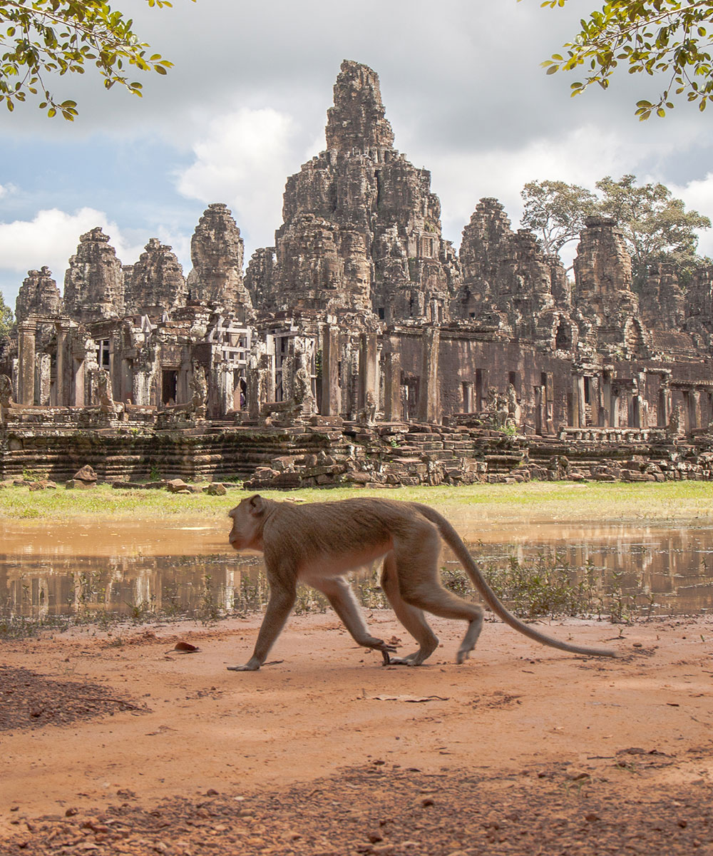 Angkor Wat Monkey Photo