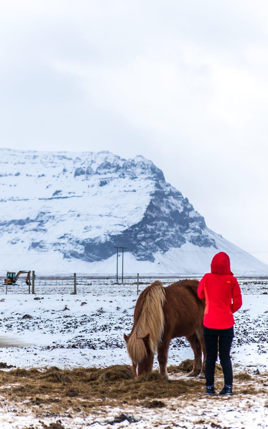 Iceland Winter Horses