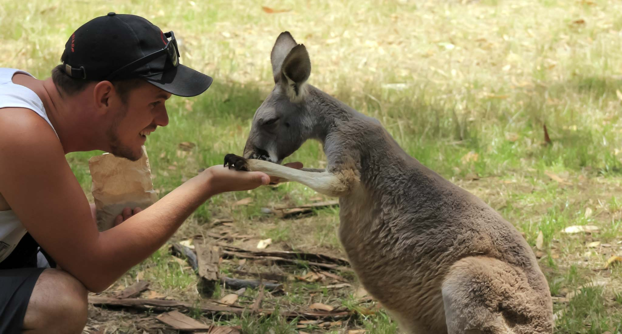 A kangaroo with Dan