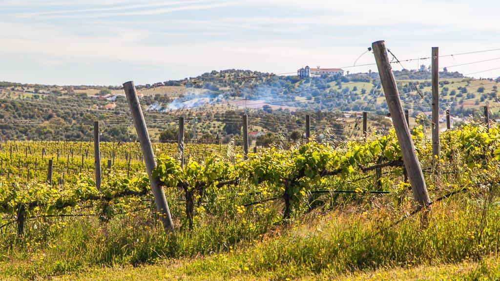 Vineyards in Alentejo