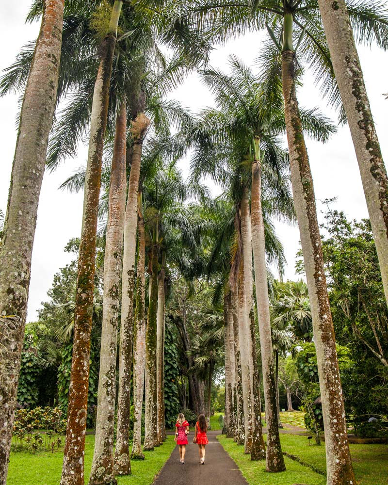 Mauritius Botanic Gardens