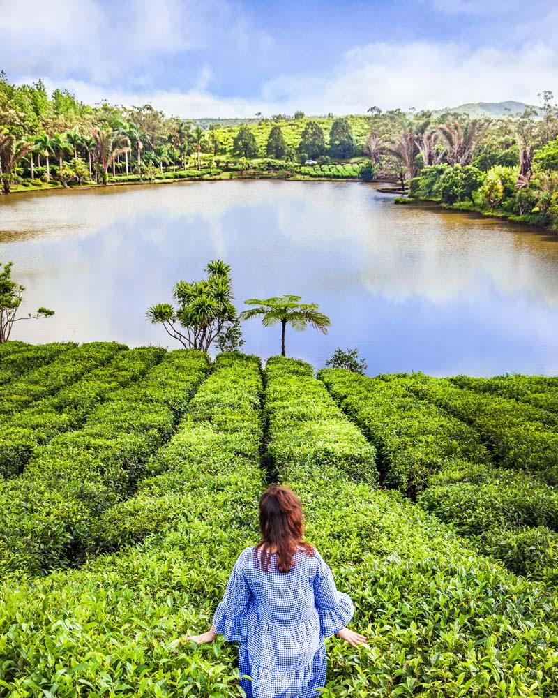 Mauritius Tea Plantations