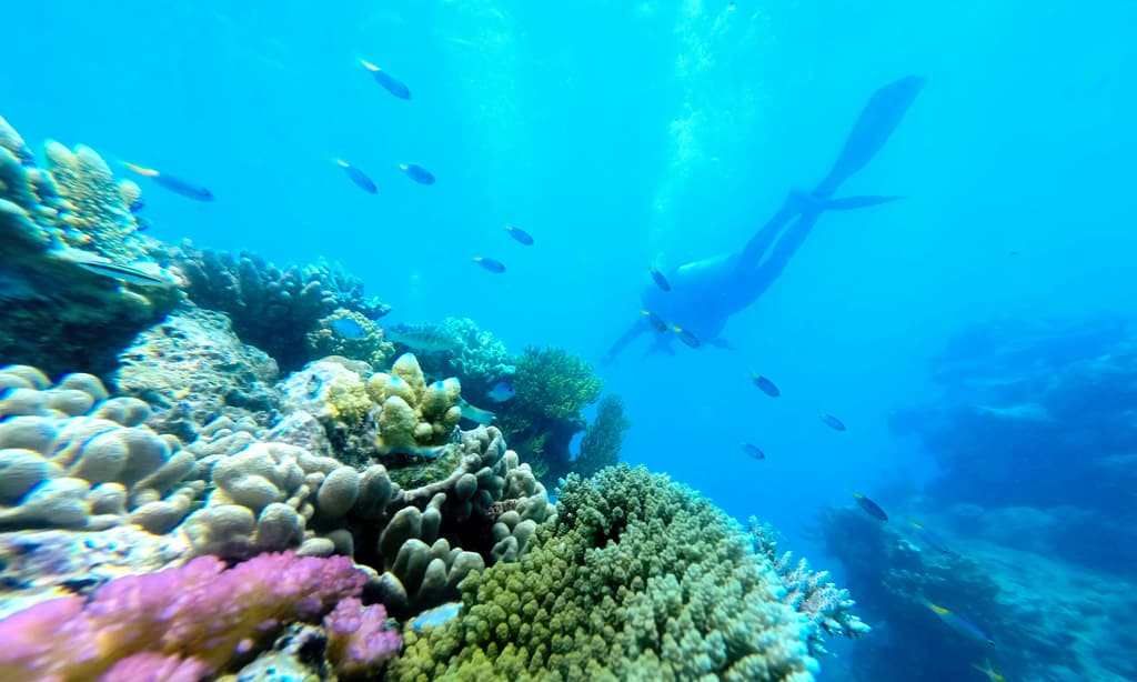 Diving the Great Barrier Reef in Australia