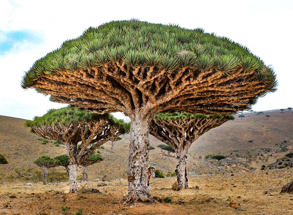 Socotra Island © Nicole Smooth