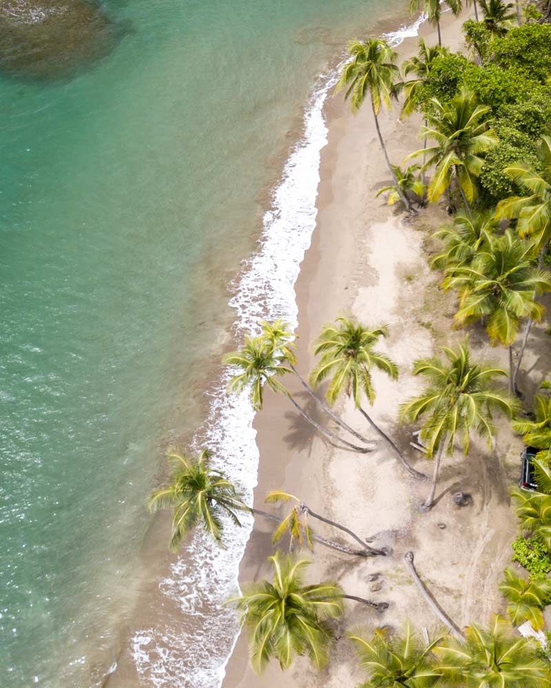 The palm trees and ocean of Batabou beach in Dominica as seen from above