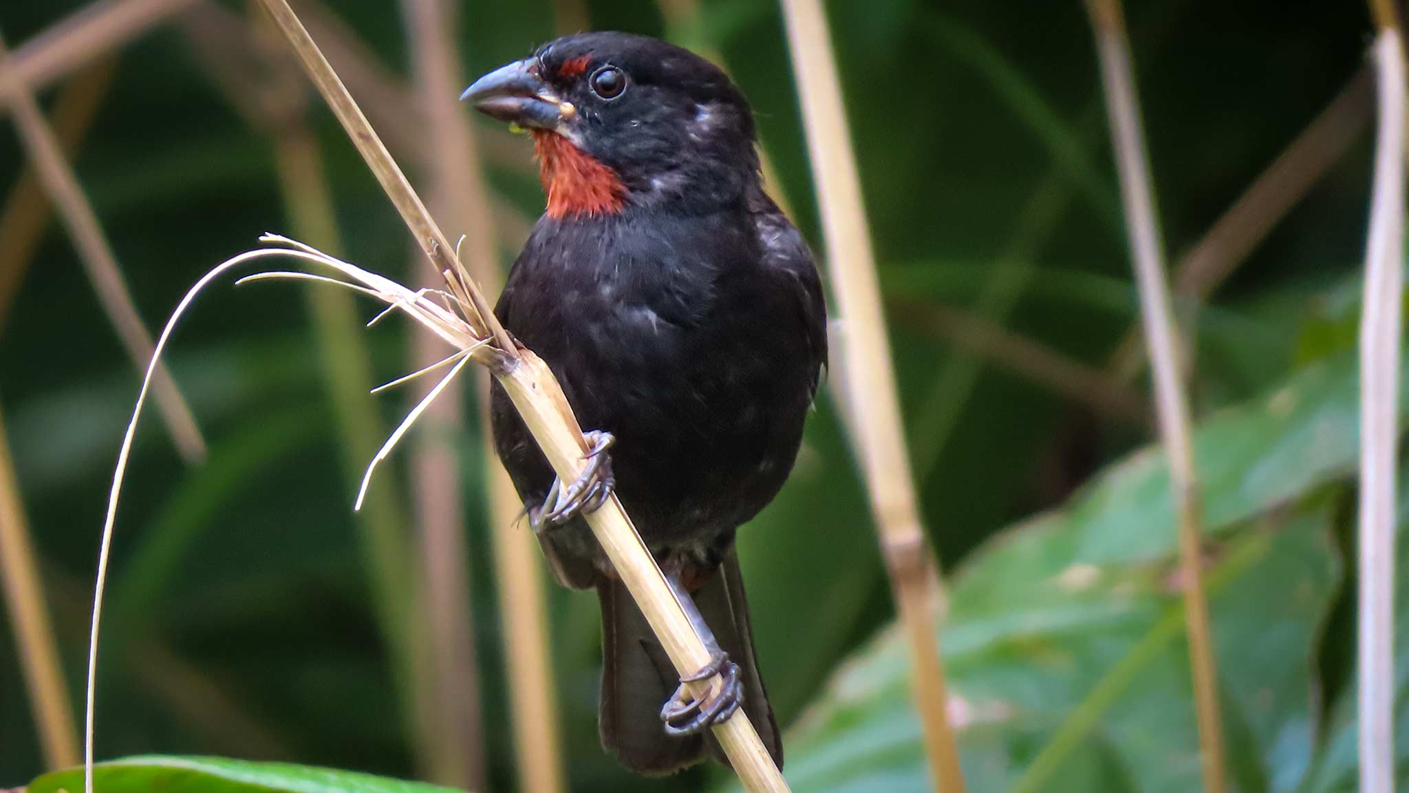 A small bird as spotted while bird watching in Dominica