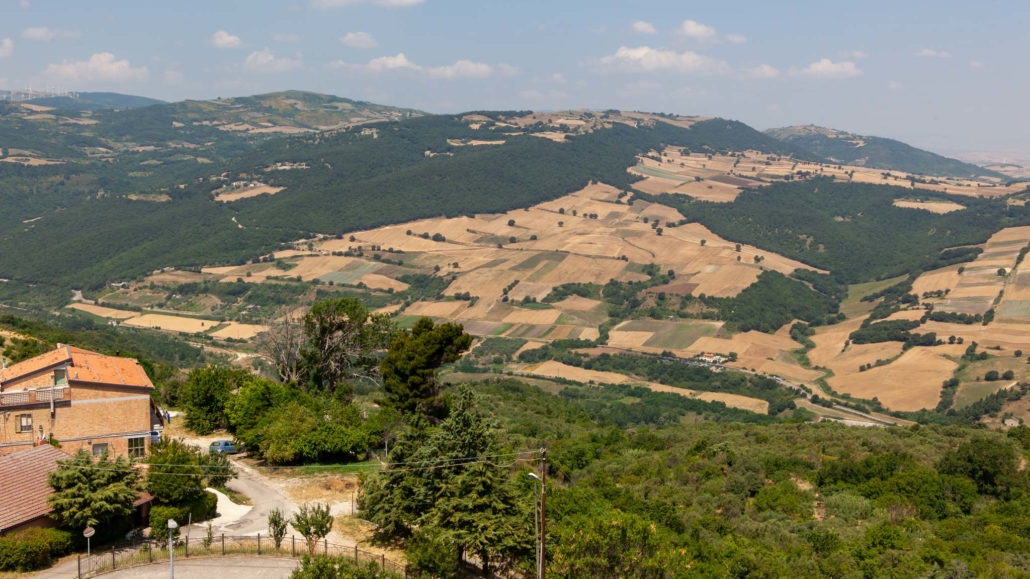 Bovino looking out on the Mountains