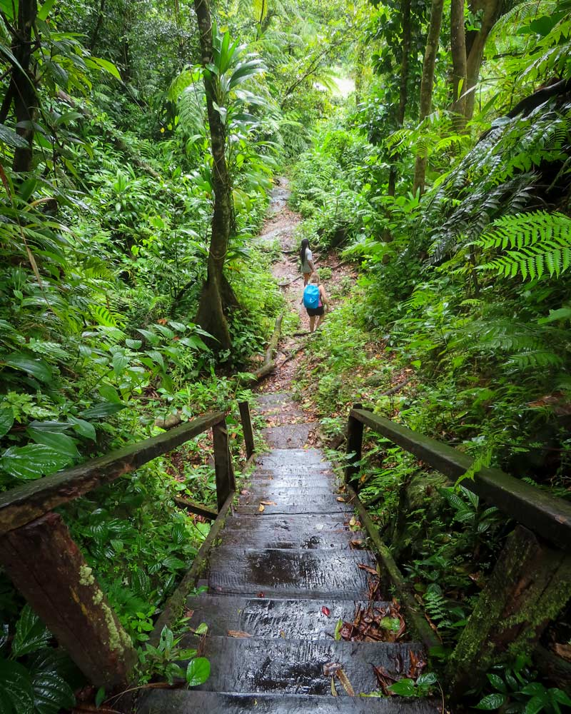 Hiking through the green bushes and trees of Dominica