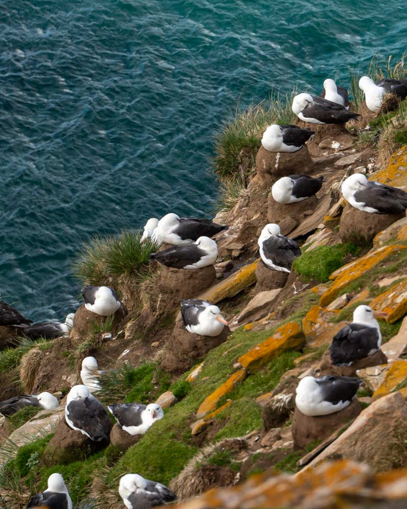 Seeing an albatross colony is nearly as impressive as its wing-span