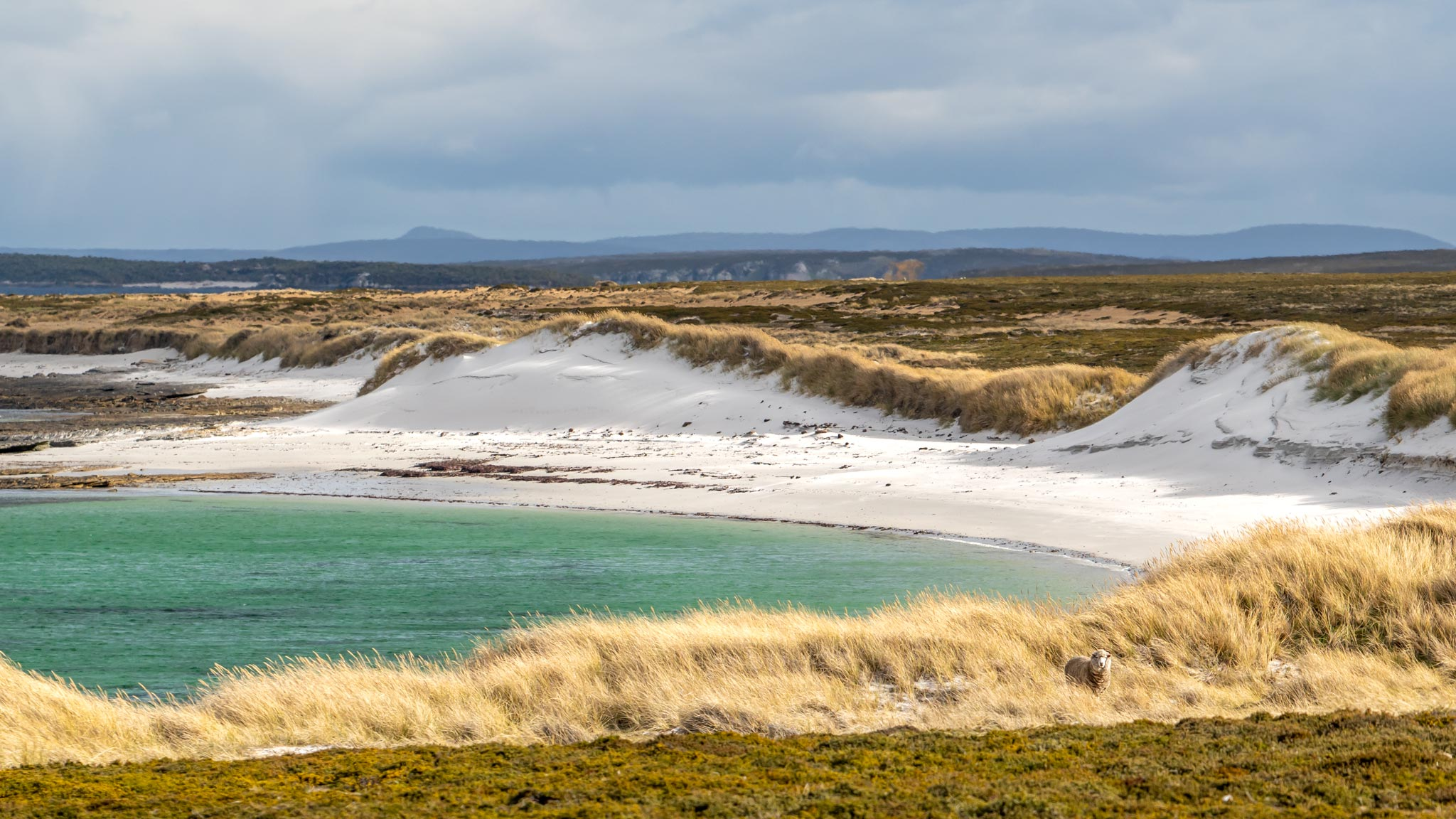 One of many untouched beaches on Weddell Island