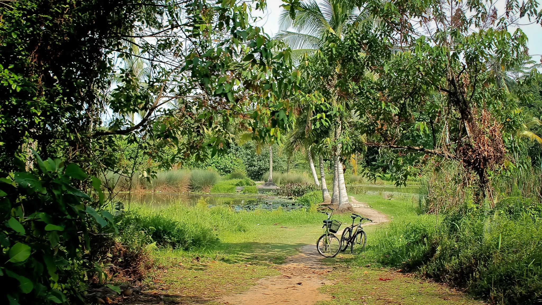 Cycling around the island of Pulua Ubin