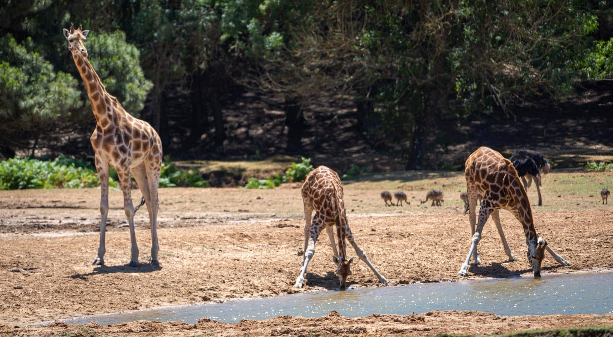 Bodeca safari park provides an alternative to the beaches