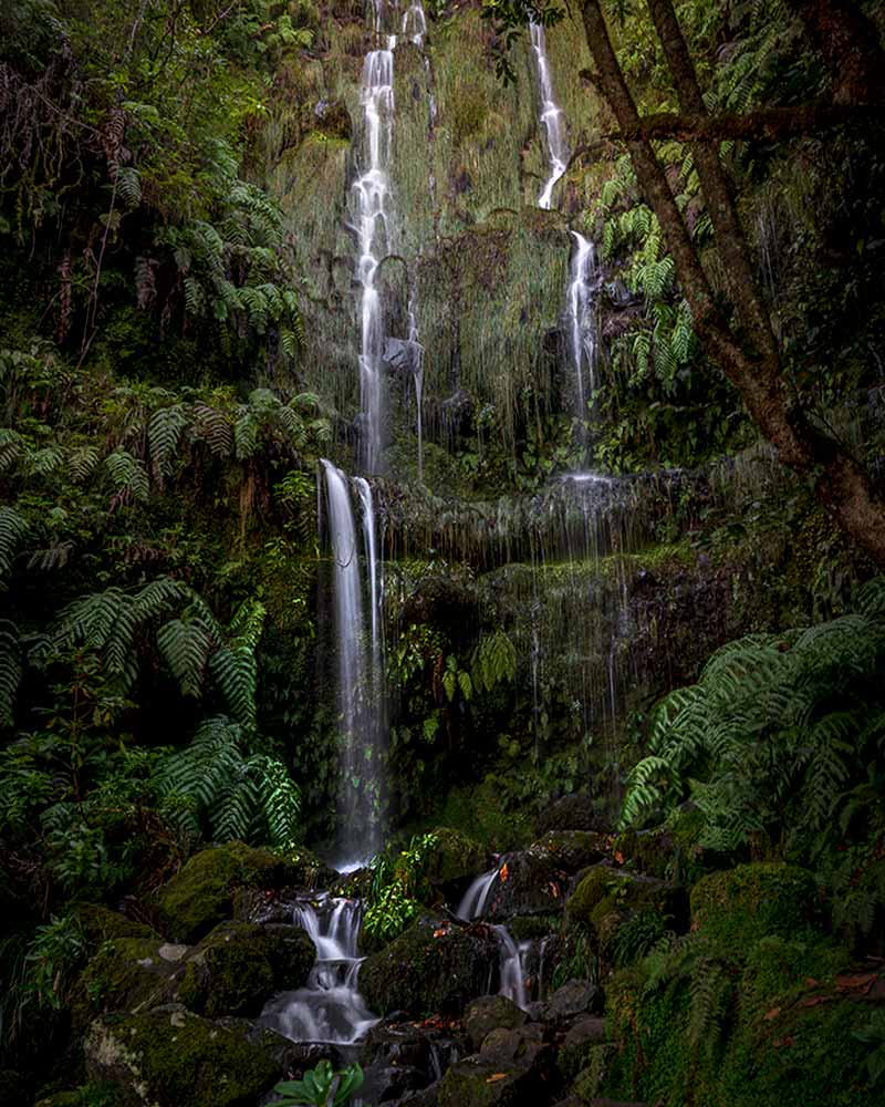 A long exposure of one of the many Maderia waterfalls cascading down a cliff coated in ferns
